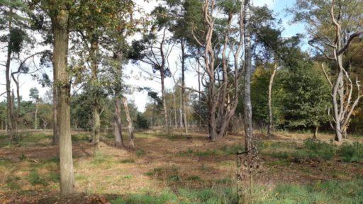 Natuurbegraafplaats Hoogengraven Ommen begraven in de natuur